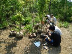 植栽する前に樹木の根元直径と樹高を計測するようす