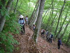 イヌブナ・ミズナラ林を登る