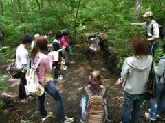 浅間山の噴火で堆積した軽石の上に成立した森林のようす