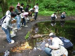 森林内のため池にオタマジャクシを発見