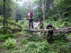ツキノワグマの棲む森林を見学(高橋一秋のクマ棚研究の調査地)