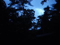 ムササビが木から木へと飛翔するようすを観察