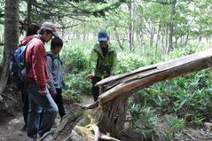 8月27日 エゾシカの食害で枯れた樹木が倒れたようす