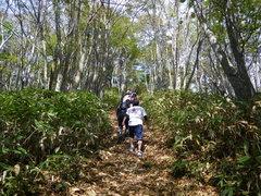 清々しい森林の中を駆け登る