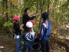 樹皮剥ぎによる昆虫誘引とキノコ栽培の説明