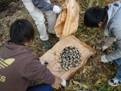 カブトムシの幼虫は合計125匹でした!