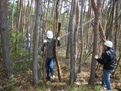 倒木を林の外へ運び出す
