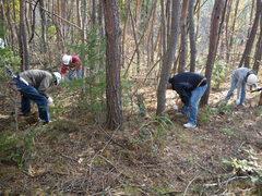 ネズミサシのみを残して、落葉樹の低木を刈り取る