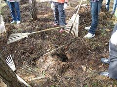 落葉を除くと、モグラやネズミの坑道と思われる穴が出てきました。