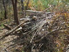 林から運び出した倒木