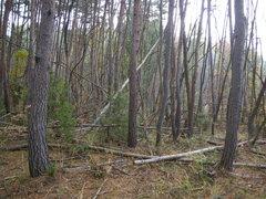 実習前の林内のようす