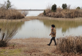 加古大池の水辺ビオトープづくりのフィールドワーク