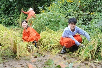 稲倉棚田での稲刈り体験